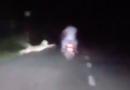 Leopard pounces on Motorists in India, Men brush-off death