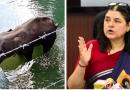 OPINION: Hate against Malappuram—Politics over India's Elephant incident